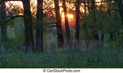 summer forest landscape at sunset - timelapse