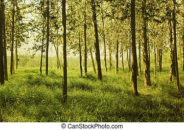 Summer forest. Photo in old image style.