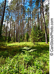 Summer forest - A fern at sunny summer forest