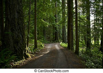 Summer Forest Road