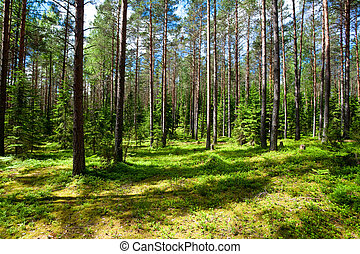 Summer forest - Sunny meadow at  summer forest