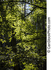 summer forest sun shines through leafs