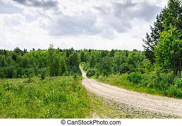 Summer forest trail landscape