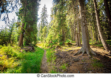 Summer forest with sun light nature woods