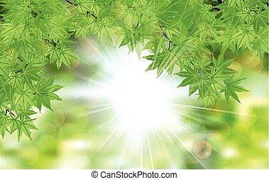 fresh leaf green leaves