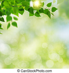 Summer garden, beauty seasonal backgrounds with beech tree and shiny bokeh