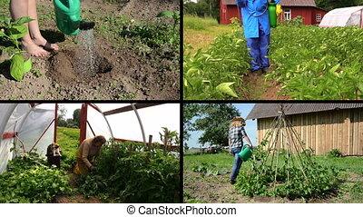 summer gardening collage