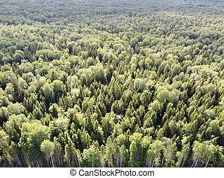 summer green dense forest aerial photography.