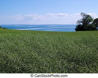 Summer green field sea background