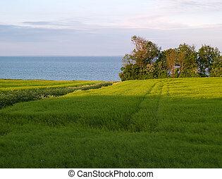 Summer green field sea backround