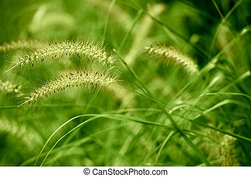 Summer Green Grasses Nature Background. Horizontal Photo.