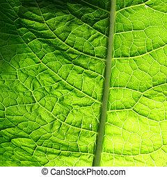 green leaf - summer green leaf macro close up