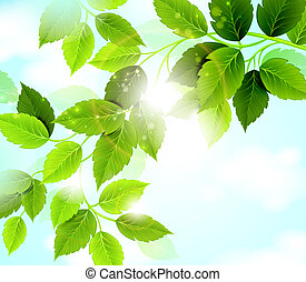 Summer green leaves - branch with green leaves hanging from...