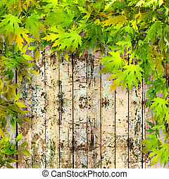 Summer green leaves on a background of old painted wooden fence