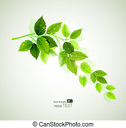 Summer green leaves - Summer branch with fresh green leaves