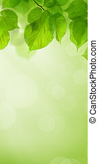 Summer Green Wallpaper Background with Leaves