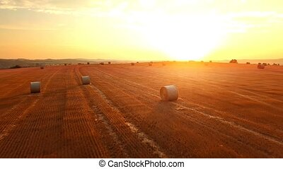Summer harvested field with straw bales in evening sunset,...