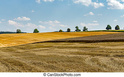 summer harvested wheat field