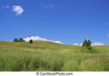 Summer Hillside - A grassy hillside on a nice Summer day in ...