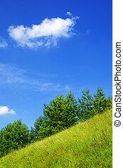 Summer hillside .