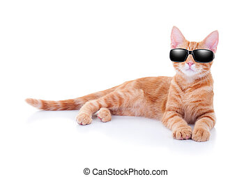 Summer Holiday Cat - Summer holiday cat or cool party cat in...
