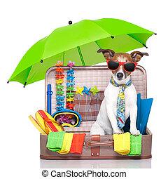 summer holiday dog - summer vacation dog in bag full of...
