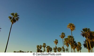 palm trees over sun shining in blue sky - summer holidays...