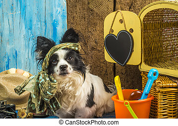Summer holidays funny dog