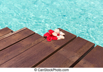 beautiful purple hibiscus flower on wooden pier