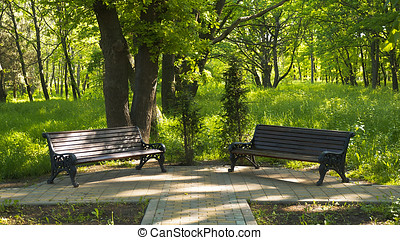 In the park, two benches stand the shined bright sun under an oak,