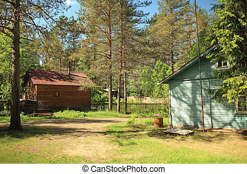 houses surrounded by pine trees