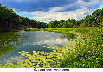 summer lake landscape