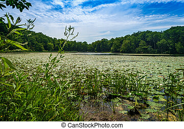 Lilypads on summer lake with bright sunlight and cloudscape