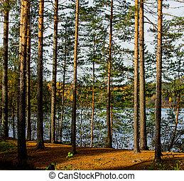 Summer lake through the trees
