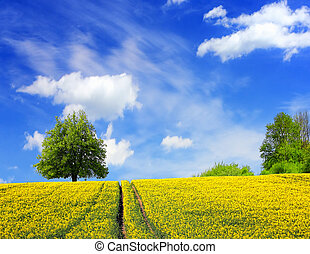 Summer landscape and blue sky