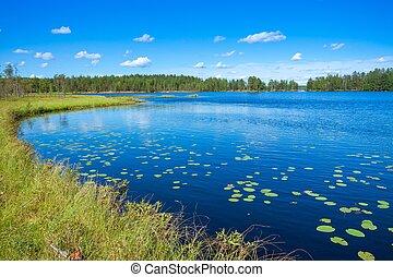 Summer landscape at the lake