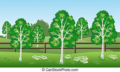Summer landscape background with birch trees, hills, grass. and chamomiles