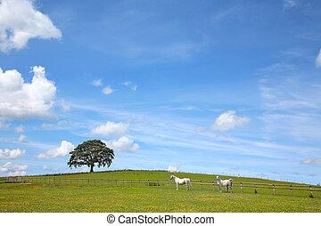 Summer Landscape Beauty