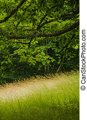 Summer Landscape, Blue Ridge Parkway