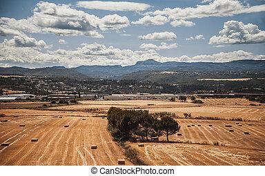 Summer landscape, Catalonia