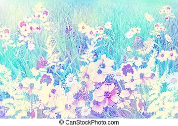 Summer landscape. field of flowers