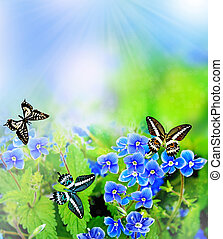 summer landscape. flowers forget-me