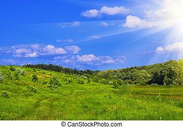Summer landscape - fresh green grass with bright blue sky...