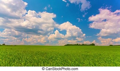 summer landscape, green field