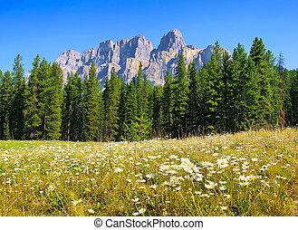 Summer landscape in Alberta, Canada