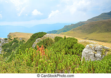 Summer landscape in mountains