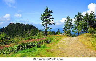 Summer landscape in National park Bavarian forest, Germany.