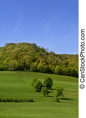 Summer landscape in Pennsylvania - Lush green summer...