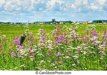 Summer landscape in rural Canada