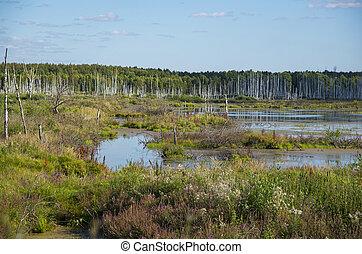Summer landscape in Russia